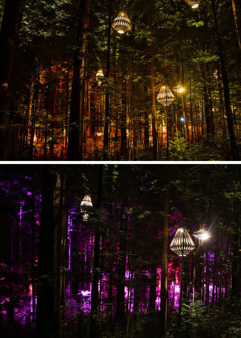 New Zealand based designer David Trubridge and Redwoods Treewalk Rotorua have worked together to create Redwoods Nightlights - New Zealand's first design-led tourism experience that features a suspended tree walk surrounded by 30 of Trubridge's custom made light fixtures.